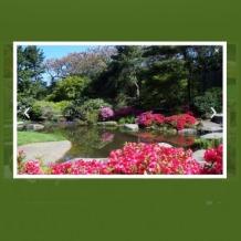 Garden Design Flash Template