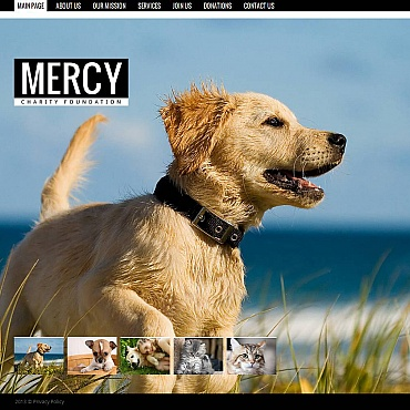 Animal Shelter Moto CMS HTML Template