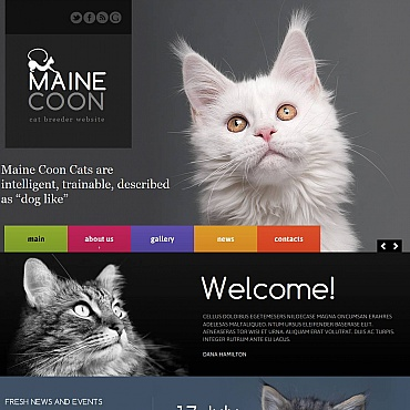 Cat Moto CMS HTML Template