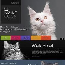 Cat Moto CMS HTML Template